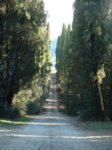 cypress_ave_rain